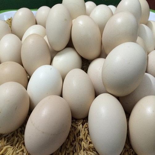 Trứng Gà Ác Lộn