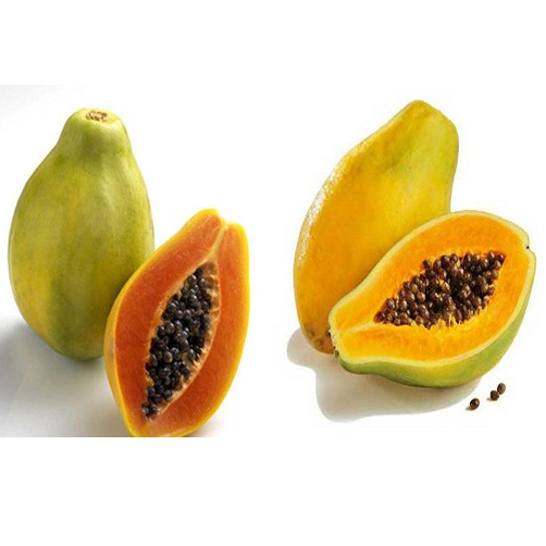 đu đủ bên trái đạt tiêu chuẩn trái cây sạch