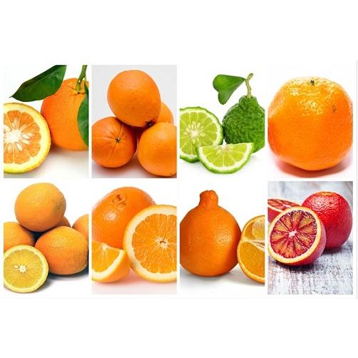 cung cấp trái cây sạch