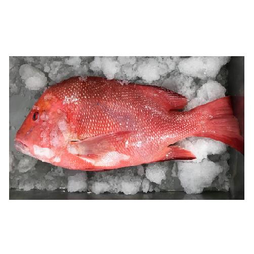 Cá Hồng Làm Sạch Central Sea Túi 0.3kg,