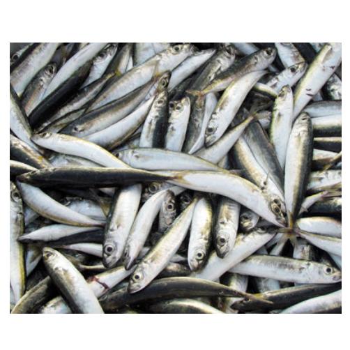 Cá Nục Suôn Nhí Central Sea Túi 1kg,