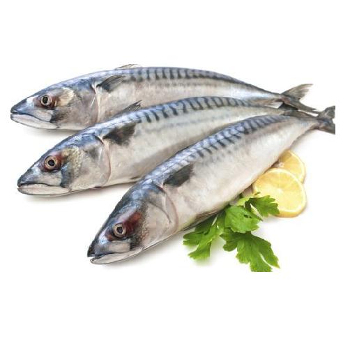 Cá Thu Mùa Central Sea Túi 1kg,