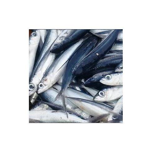 Cá Chuồn Làm Sạch Central Sea Túi 1kg