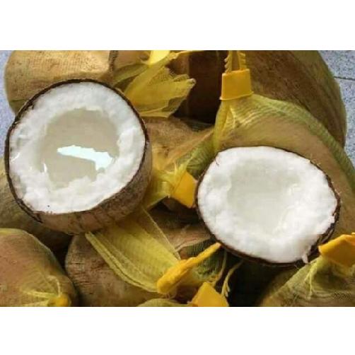 Dừa Sáp Loại 2 Trà Vinh,